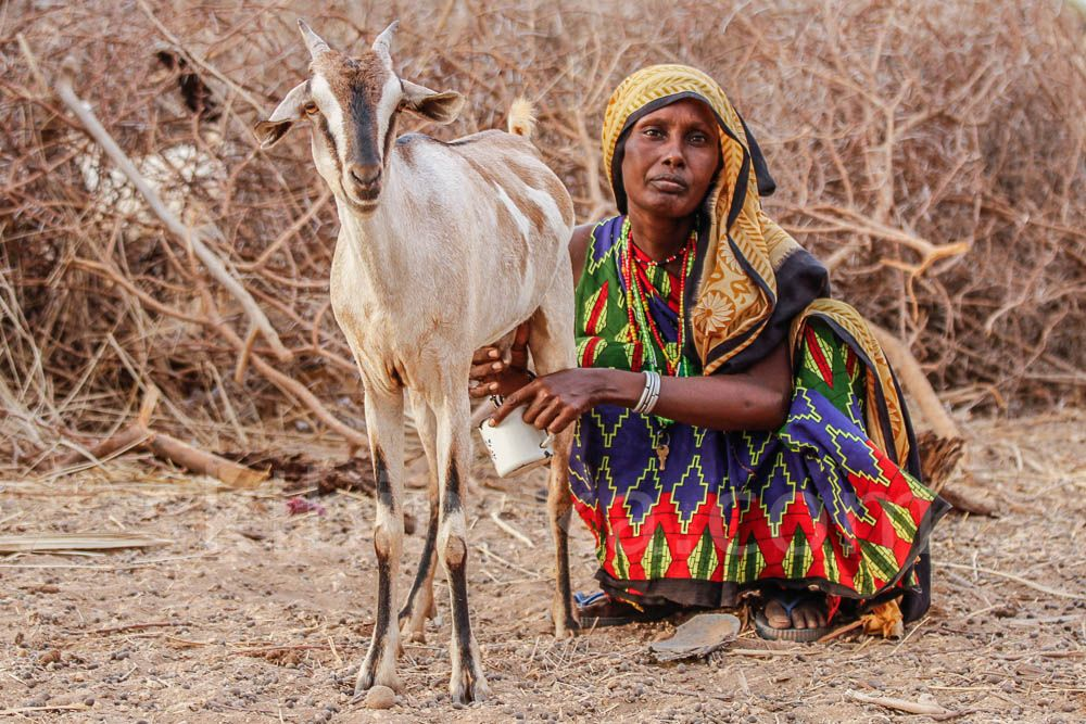 Tribal East Africa: Pastoralists Gabbra